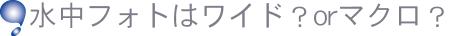 函館の海:ファンダイビングツアー